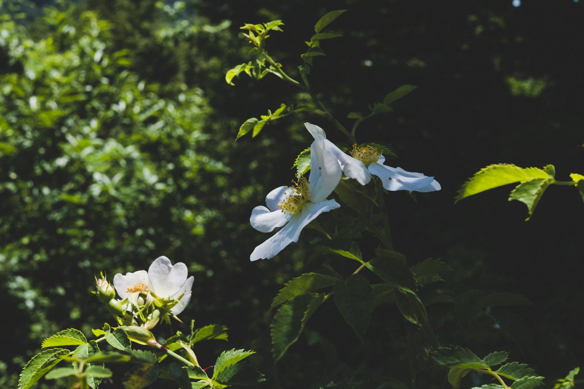 garfagnana deluxe-29